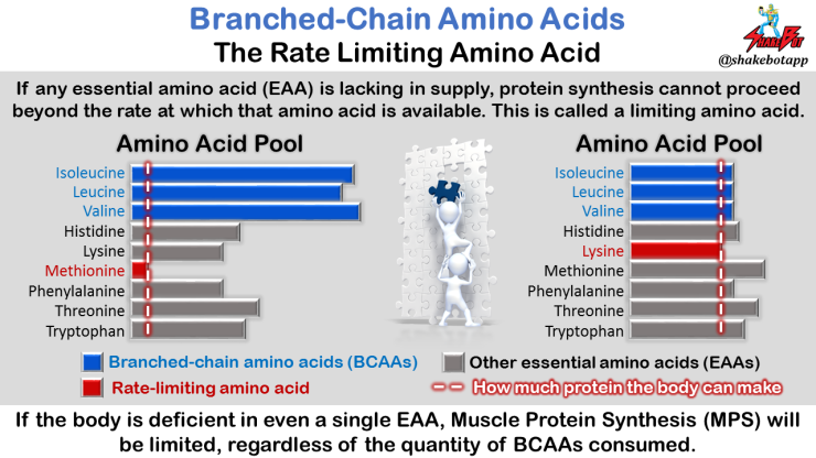 Branched-Chain-Amino-Acids-Rate-Limiting-Amino-Acid