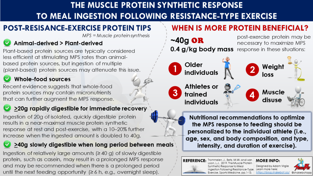 The Muscle Protein Synthetic Response to Meal Ingestion Following Resistance-Type Exercise